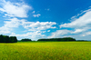 Green Meadows - blauen Himmel