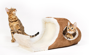 Bengal-Katze spielt in Playcave