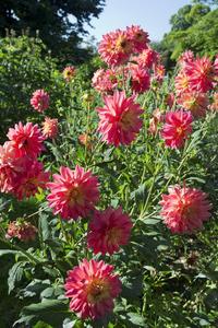 Blütenblätter Englisch